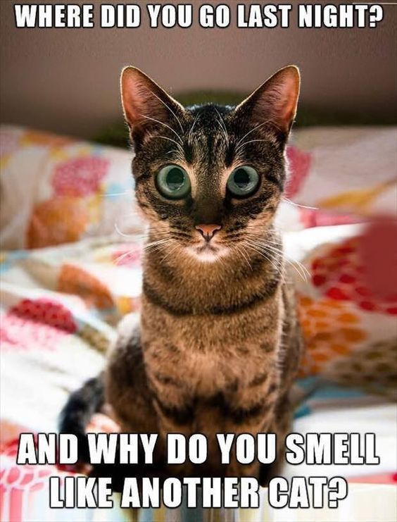 30 Hilarious Cat Memes Quotes Daily Leading Quotes Magazine