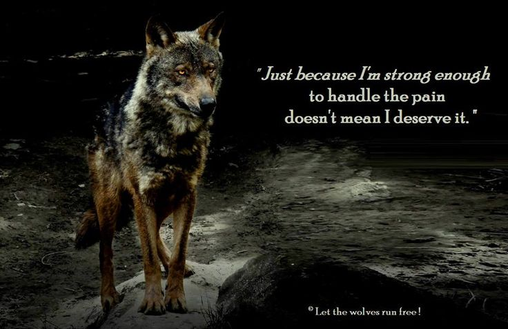 Wolf Quotes About Strength: Inspirational Quotes About Strength :LET THE WOLVES RUN