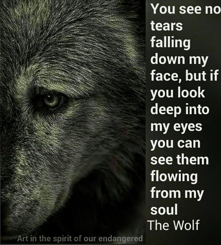 Inspirational Quotes About Strength :The Wolf ... - Quotes ...