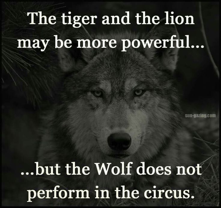 Inspirational Quotes About Strength :Throw me to the wolves
