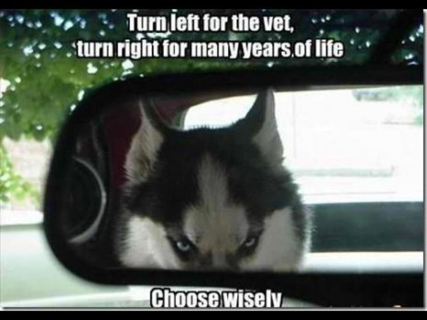 Best Funny Quotes Funny Animal Memes Best 113 Funny Animal Memes