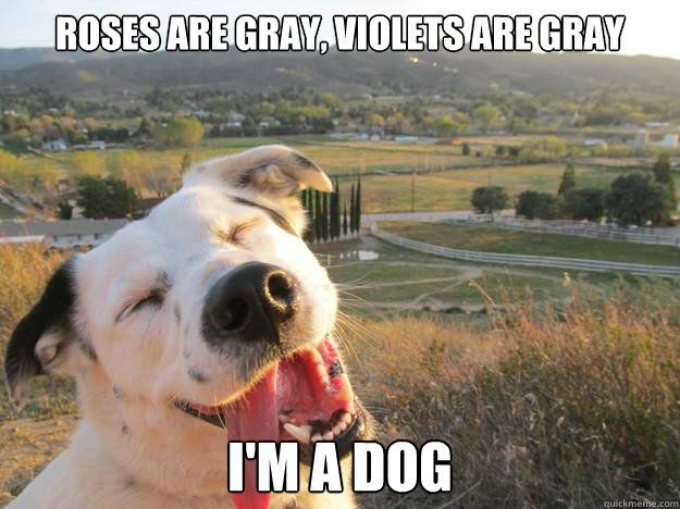 Funniest Animal Memes In The World : The best dog memes ever dog memes memes and dog