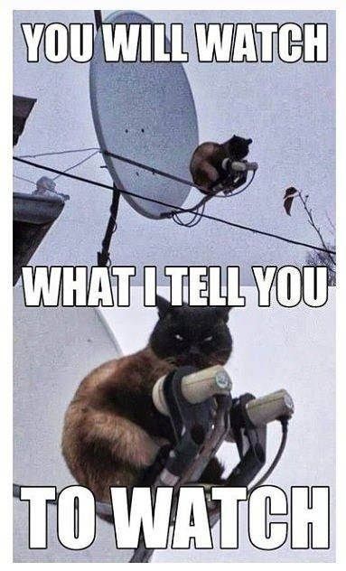 Best Funny Quotes :Top 25 Thug Life Cat Memes... - Quotes ...