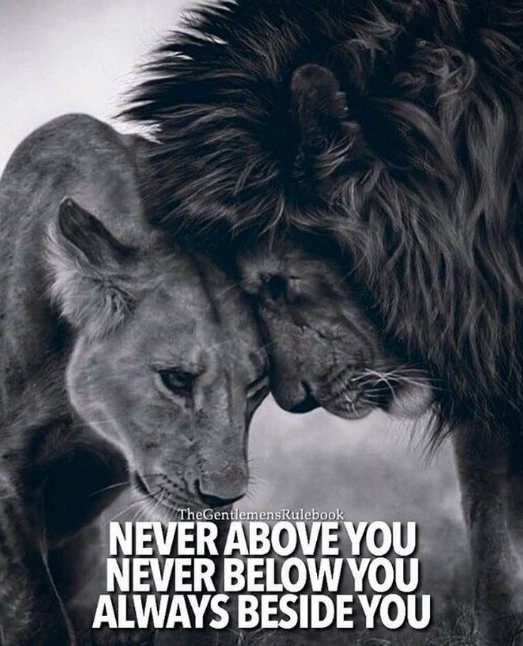 King And Queen Love Quotes Alluring Quotes About Life Always  Quotes Daily  Leading Quotes