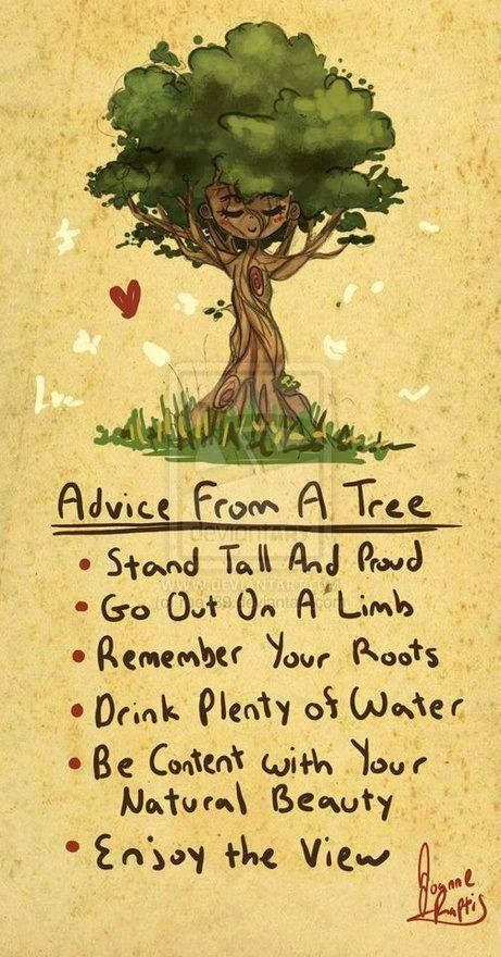 Quotes About Life :Tree advice - Quotes Daily | Leading ...