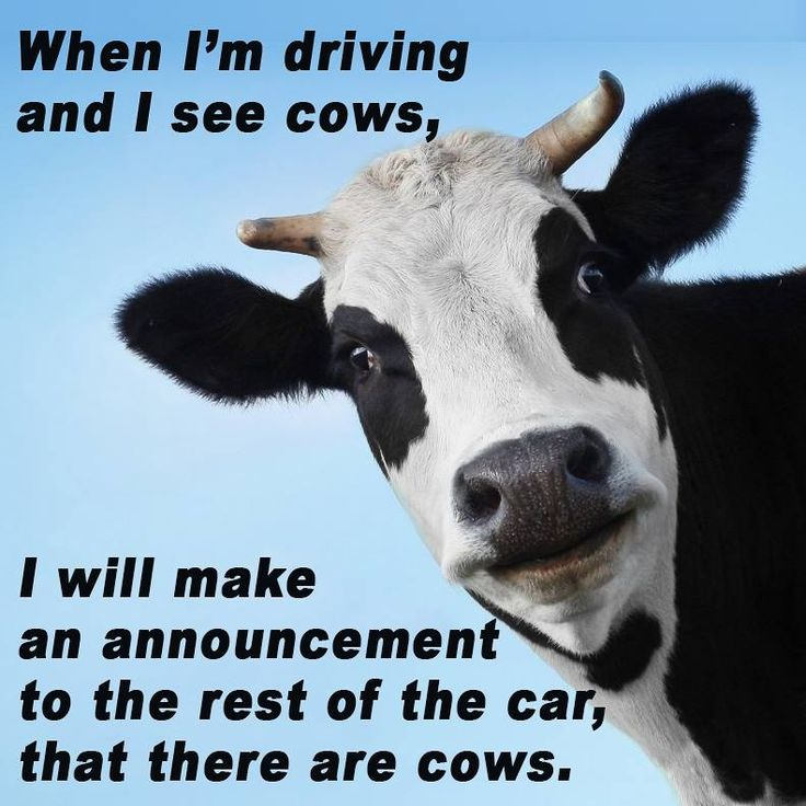 Funny Quotes about Life :Get Your Mootor Running! #cows # ...