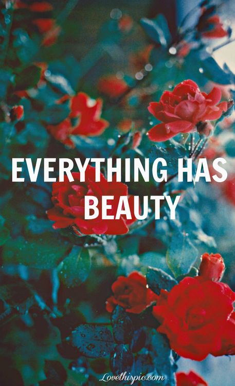 Photography Quotes Everything Has Beauty Life