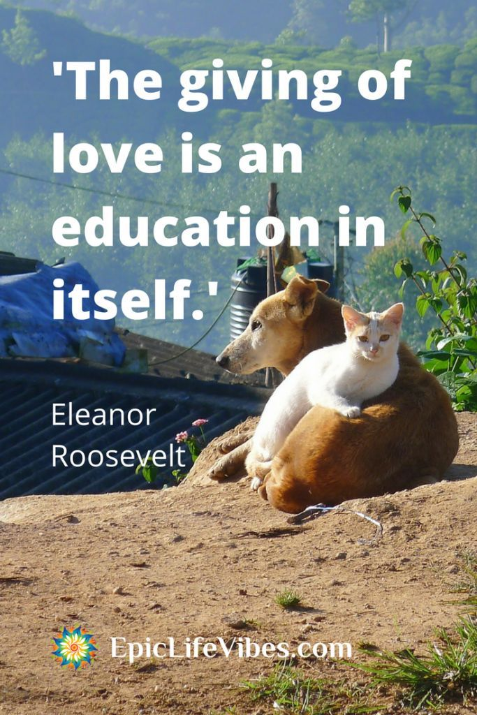 Quotes About Life Wise Uplifting Inspirational Quotes Of Eleanor