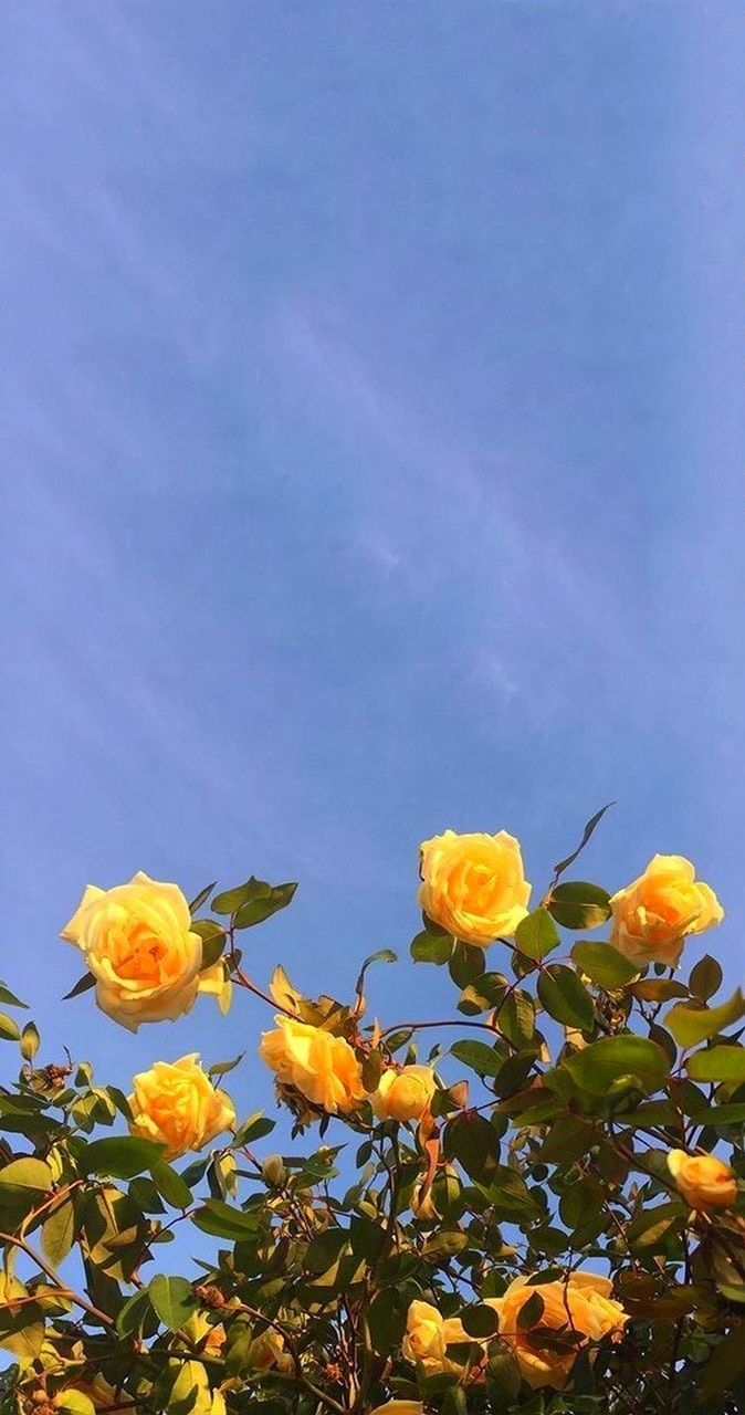 photography quotes flower rose yellow sky quotes daily